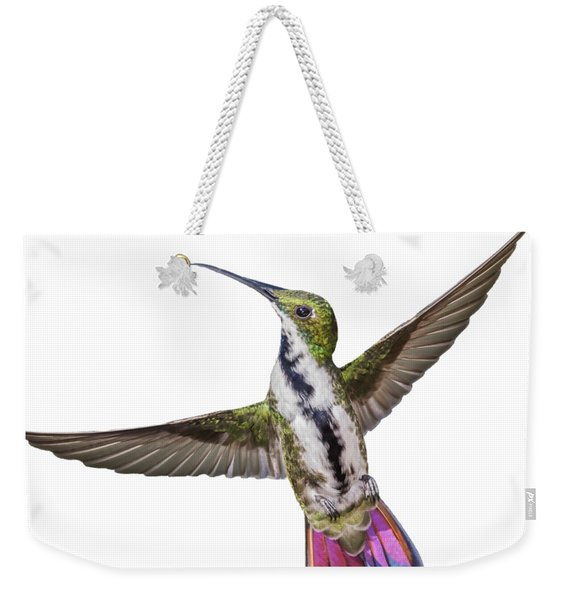 Weekender Tote Bag featuring the photograph Black Throated Mango by Rachel Lee Young
