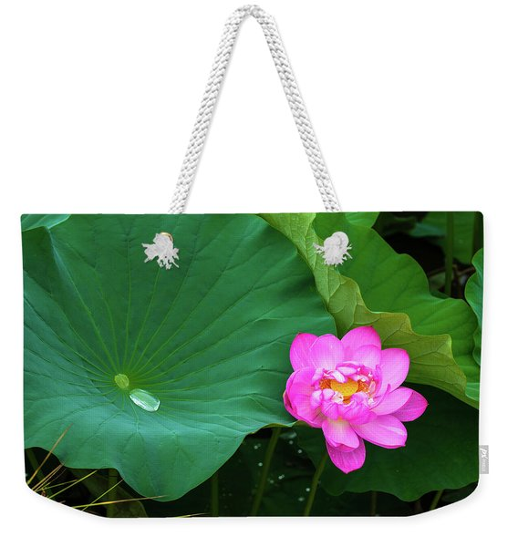Blooming Pink And Yellow Lotus Lily Weekender Tote Bag