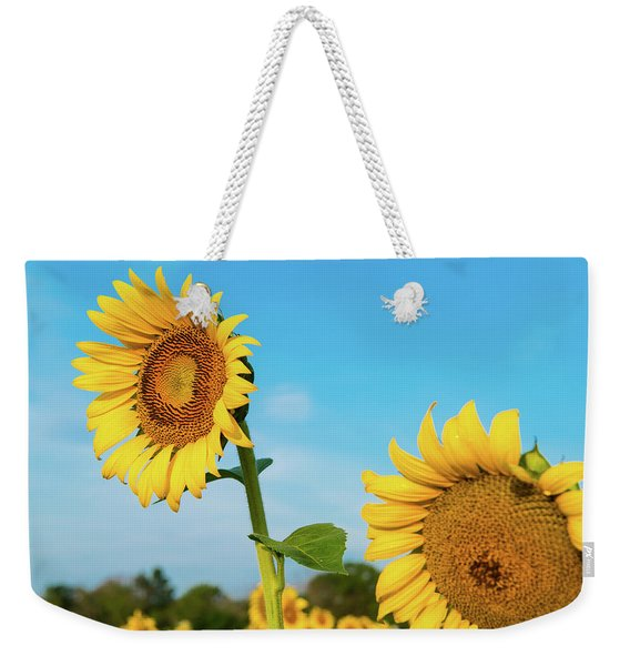 Weekender Tote Bag featuring the photograph Blooming Sunflower In Blue Sky by Dennis Dame