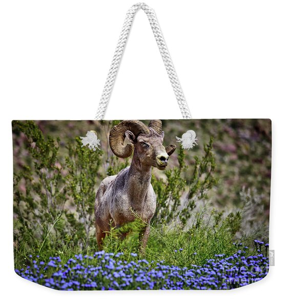 Weekender Tote Bag featuring the photograph  Blooms And Bighorn In Anza Borrego Desert State Park  by Sam Antonio Photography