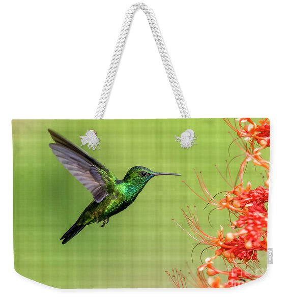 Weekender Tote Bag featuring the photograph Blue Chinned Sapphire by Rachel Lee Young