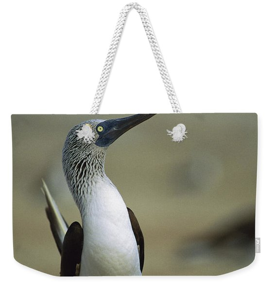 Blue-footed Booby Sula Nebouxii Weekender Tote Bag