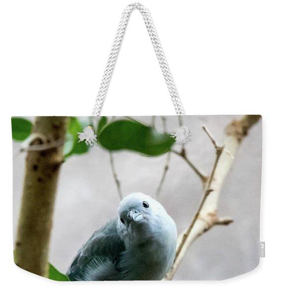 Blue-grey Tanager Weekender Tote Bag