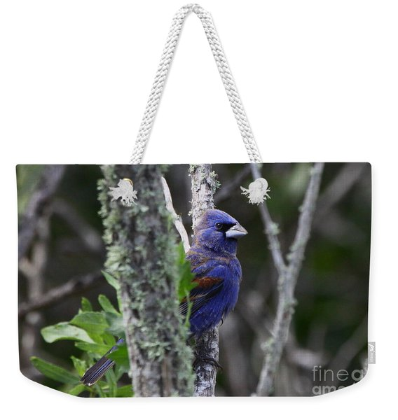 Blue Grosbeak In A Mangrove Weekender Tote Bag