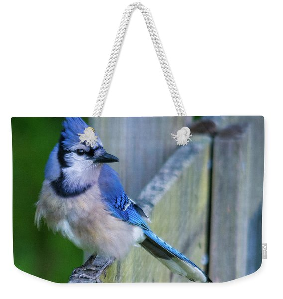 Blue Jay Fluffed Weekender Tote Bag