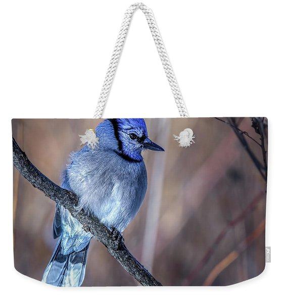Blue Jay In Profile Weekender Tote Bag