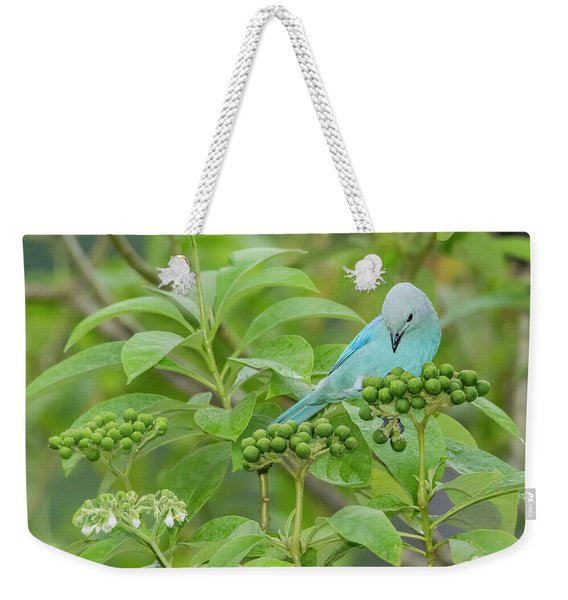 Weekender Tote Bag featuring the photograph Blue Jean Baby by Rachel Lee Young