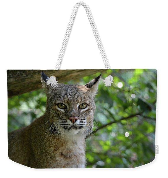 Bobcat Staring Contest Weekender Tote Bag