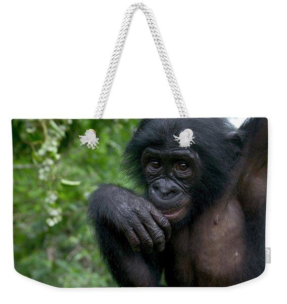 Bonobo Pan Paniscus Juvenile Orphan Weekender Tote Bag