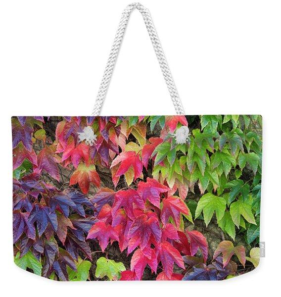Boston Ivy In The Fall Weekender Tote Bag