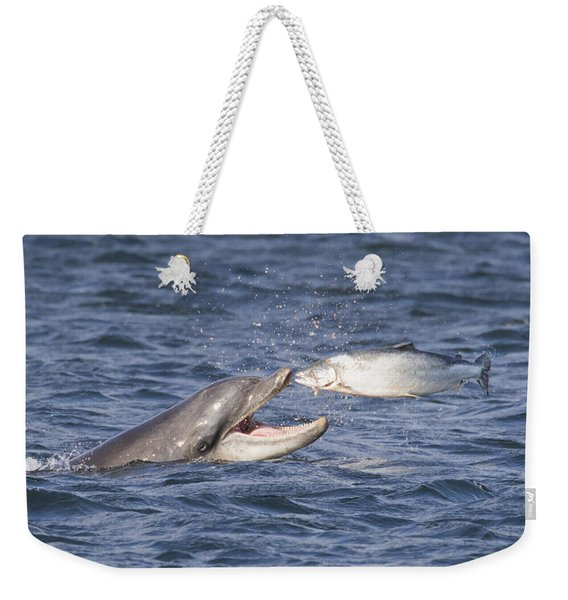 Bottlenose Dolphin Eating Salmon - Scotland  #36 Weekender Tote Bag