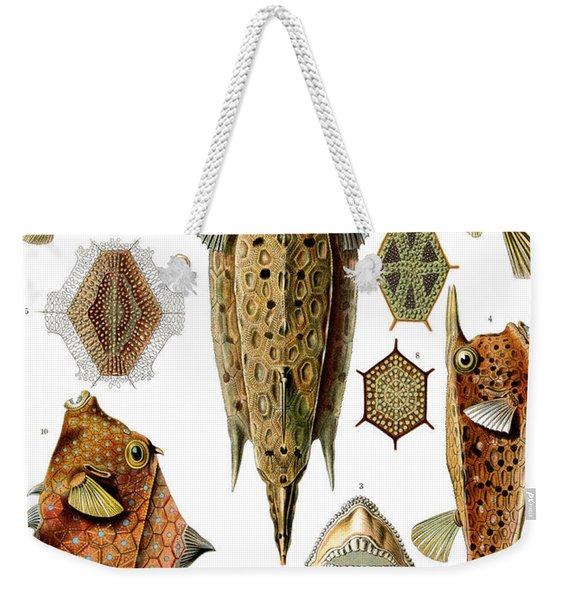 Box Fishes Weekender Tote Bag