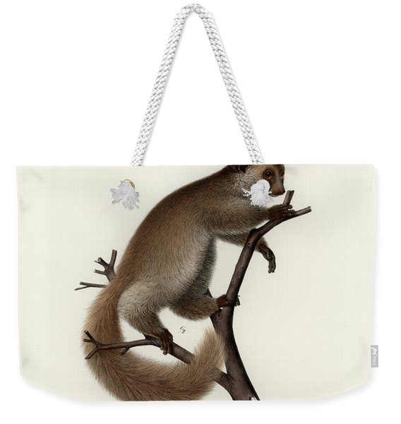 Brown Greater Galago Or Thick-tailed Bushbaby Weekender Tote Bag