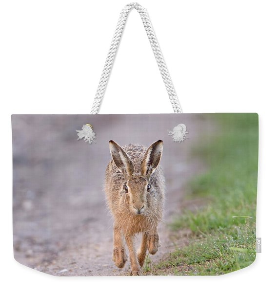 Brown Hare Approaching Down Track Weekender Tote Bag