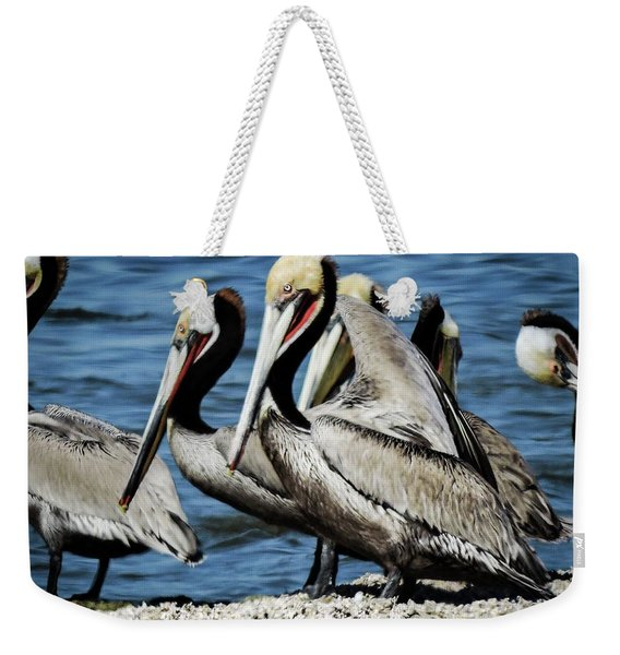 Brown Pelicans Preening Weekender Tote Bag