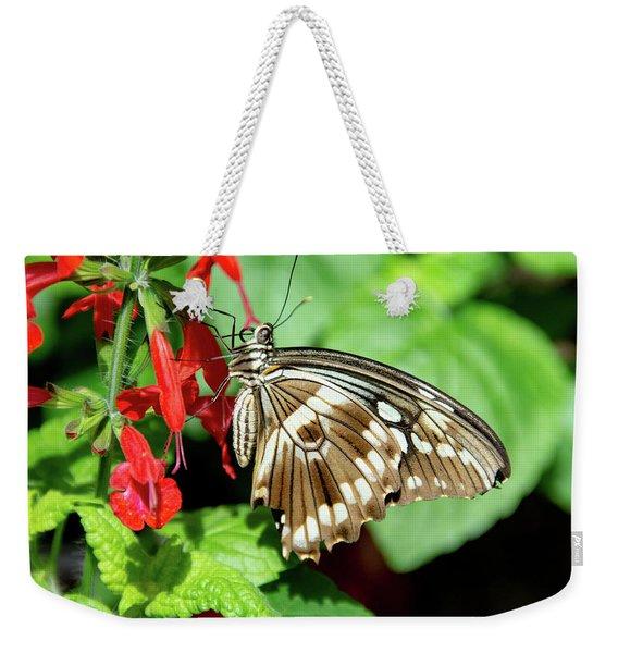 Brown Swallowtail Butterfly Weekender Tote Bag