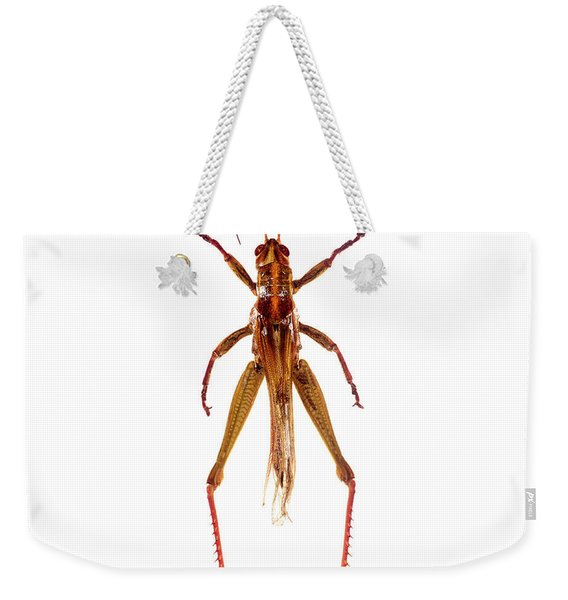 Weekender Tote Bag featuring the photograph Bug Series 020 by Clayton Bastiani