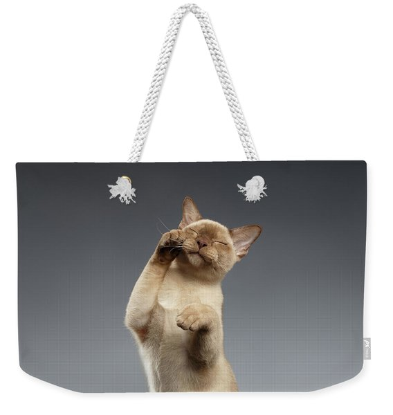 Burma Cat Paws Snout Covers On Gray Weekender Tote Bag