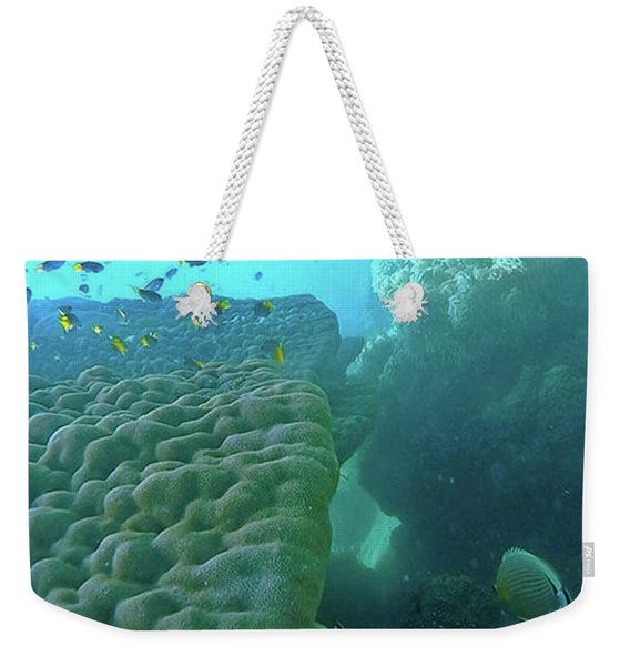 Weekender Tote Bag featuring the photograph Butterfly Fish  by Debbie Cundy