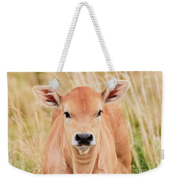 Calf In The High Grass Weekender Tote Bag