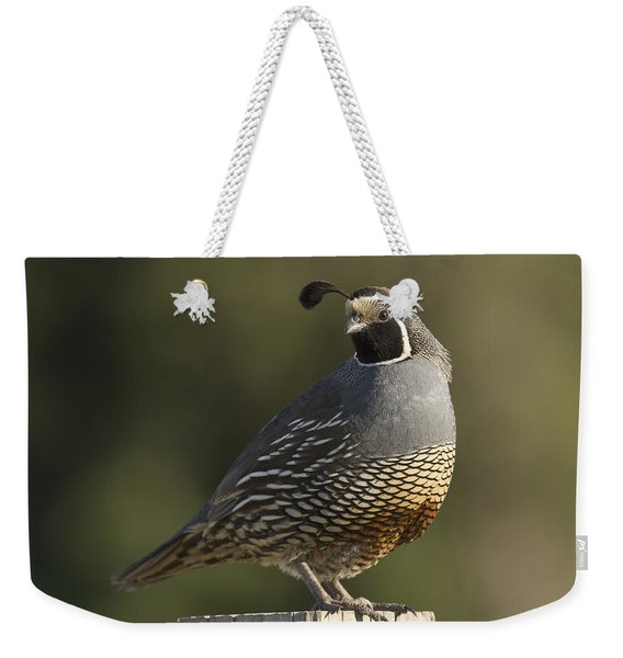 California Quail Male Santa Cruz Weekender Tote Bag