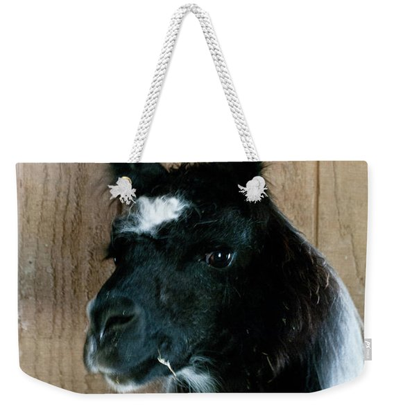 Weekender Tote Bag featuring the photograph Camelid 3 by Catherine Sobredo