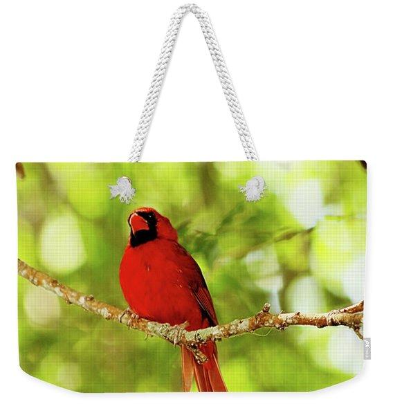 Cardinal Stare Weekender Tote Bag