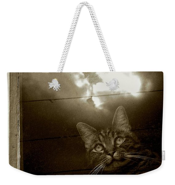 Weekender Tote Bag featuring the photograph Cat In The Window by Patricia Strand