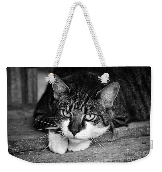 Cat Naps 2 Weekender Tote Bag