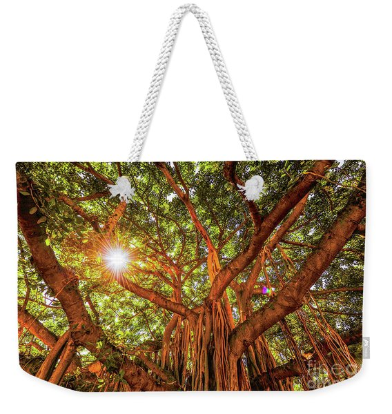 Catch A Sunbeam Under The Banyan Tree Weekender Tote Bag