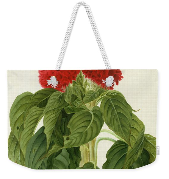 Celosia Argentea Cristata And Butterfly Weekender Tote Bag