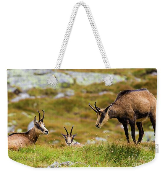 Chamois Family Weekender Tote Bag
