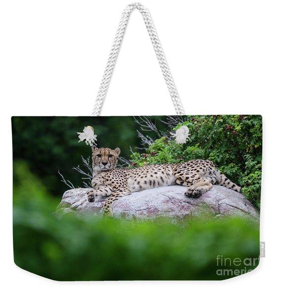 Cheetah Rests On A Rock Weekender Tote Bag