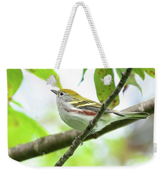 Chestnut-sided Warbler Weekender Tote Bag