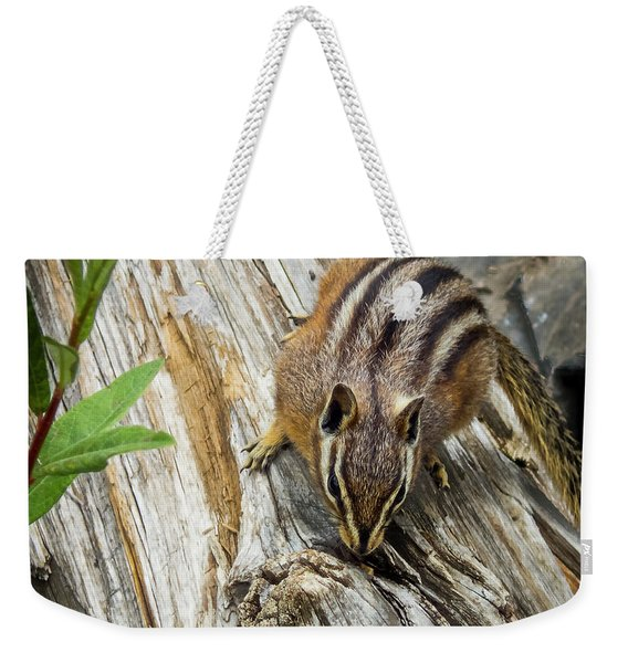 Chipmunk On A Log Weekender Tote Bag