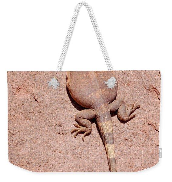 Chuckwalla, Saurolamus Ater Weekender Tote Bag