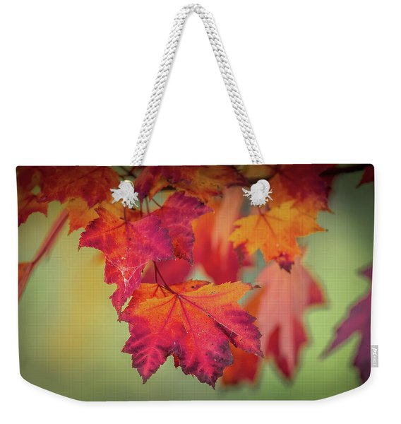 Close-up Of Red Maple Leaves In Autumn Weekender Tote Bag