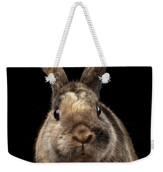 Closeup Funny Little Rabbit, Brown Fur, Isolated On Black Backgr Weekender Tote Bag