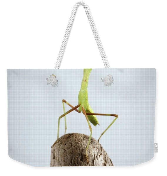 Closeup Green Praying Mantis On Stick Weekender Tote Bag