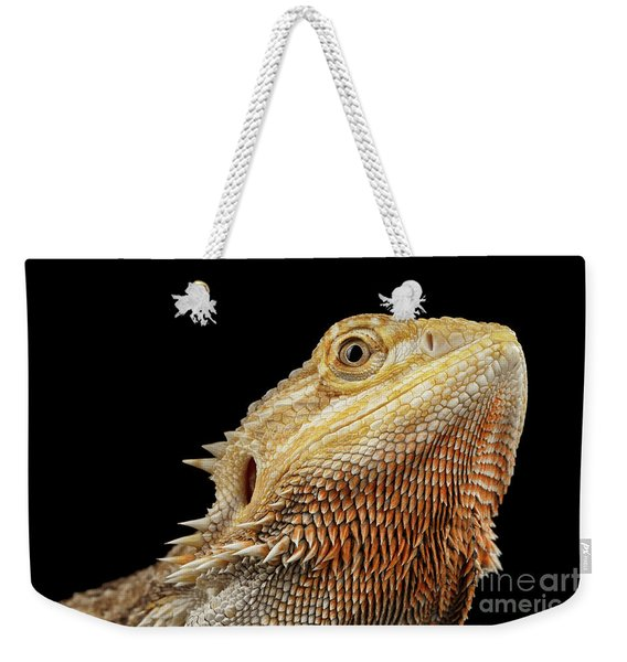 Closeup Head Of Bearded Dragon Llizard, Agama, Isolated Black Background Weekender Tote Bag