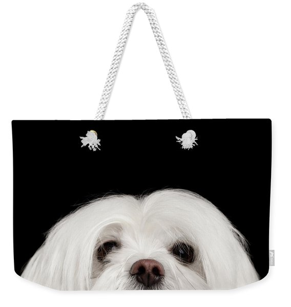 Closeup Nosey White Maltese Dog Looking In Camera Isolated On Black Background Weekender Tote Bag