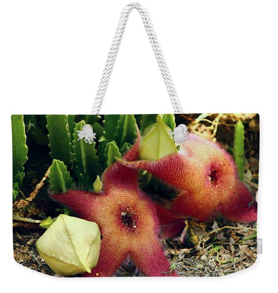 Closeup Of A Desert Starfish Weekender Tote Bag