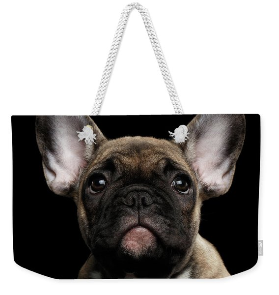 Closeup Portrait French Bulldog Puppy, Cute Looking In Camera Weekender Tote Bag