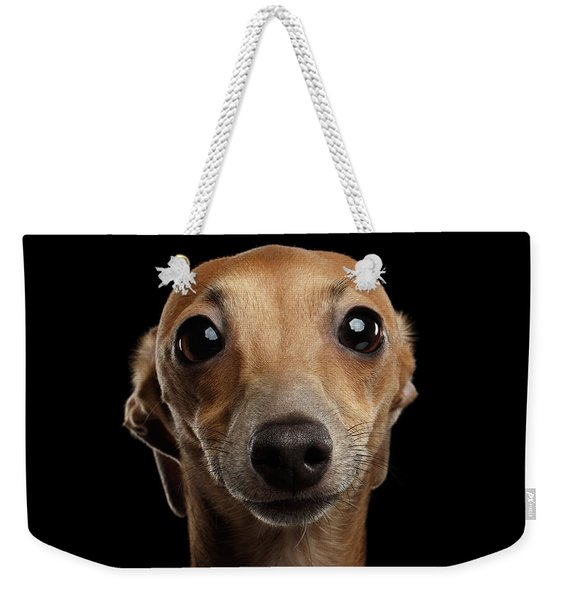 Closeup Portrait Italian Greyhound Dog Looking In Camera Isolated Black Weekender Tote Bag
