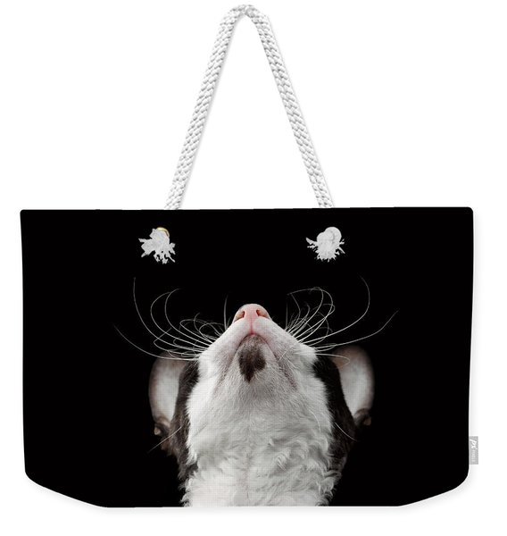 Closeup Portrait Of Cornish Rex Looking Up Isolated On Black  Weekender Tote Bag