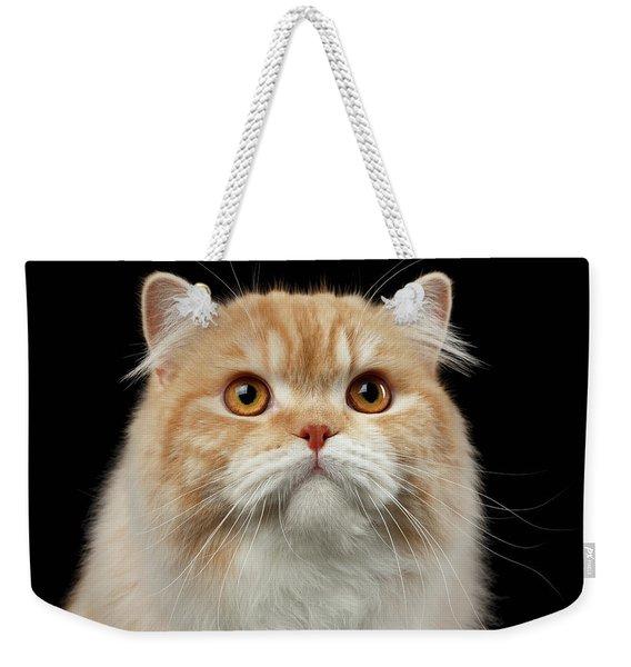 Closeup Portrait Of Red Big Persian Cat Angry Looking On Black Weekender Tote Bag
