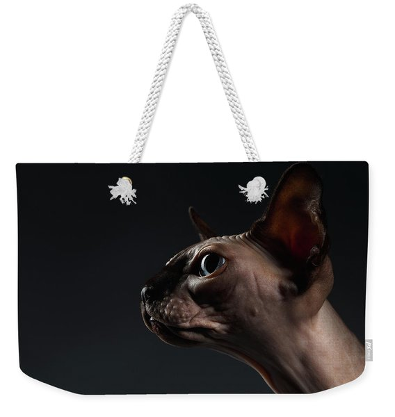 Closeup Portrait Of Sphynx Cat In Profile View On Black  Weekender Tote Bag