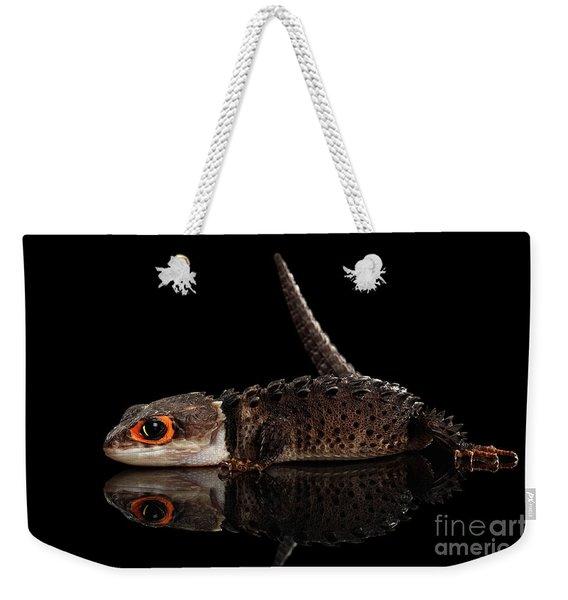 Closeup Red-eyed Crocodile Skink, Tribolonotus Gracilis, Isolated On Black Background Weekender Tote Bag