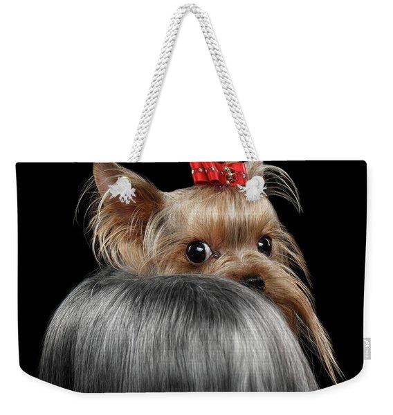 Closeup Yorkshire Terrier Dog, Long Groomed Hair Pity Looking Back Weekender Tote Bag