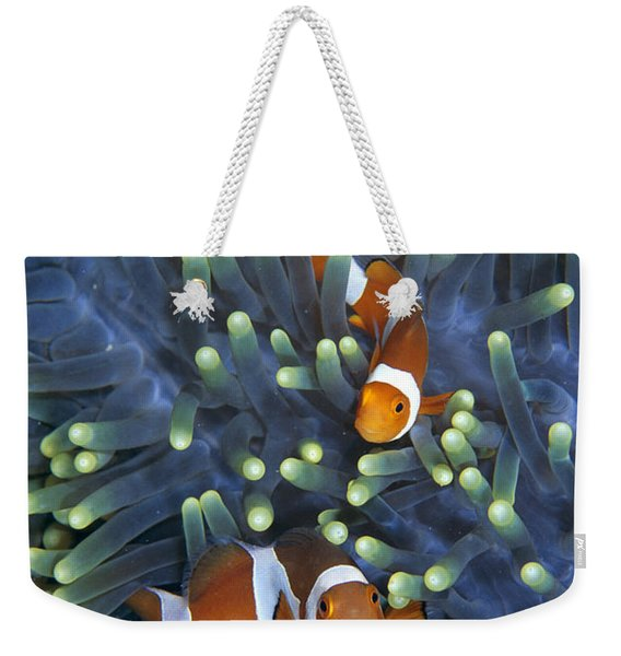 Clown Anemonefish Amphiprion Ocellaris Weekender Tote Bag